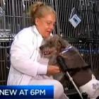 Missing Disabled Dog Returned in Time for Thanksgiving