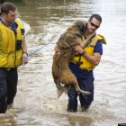 Austin Firefighters Save Dog from Flash Flood