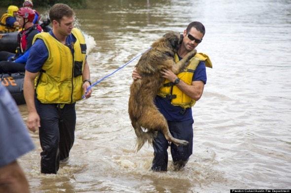 Σώζοντας ένα σκύλο από τις πλημμύρες...