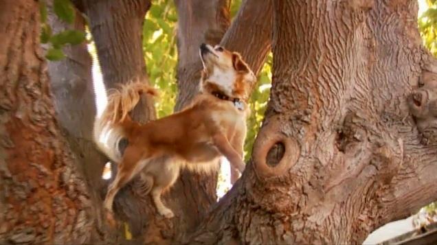 Tree-Climbing Dog Puts Cats to Shame