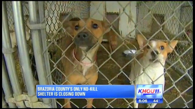 Everything Must Go as Texas No-Kill Shelter Closes