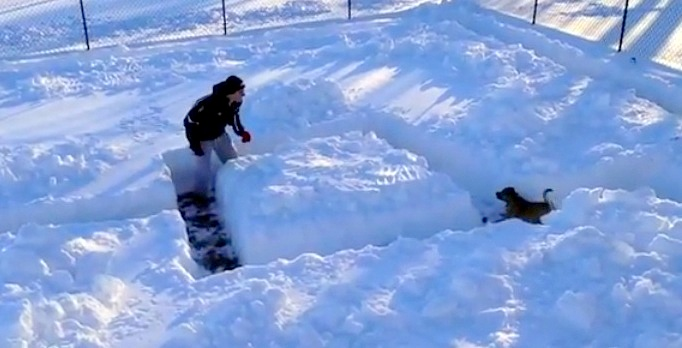 Dog in Snow Maze