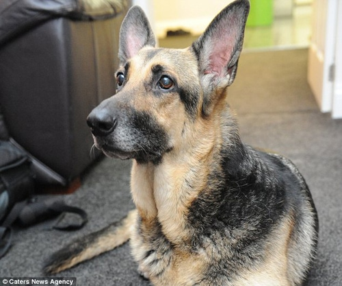 Hero Dog Discovers Newborn Baby Girl Abandoned In Park