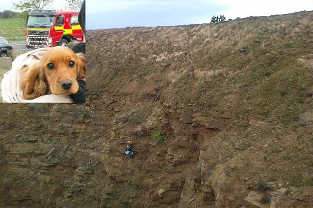 Firefighters Rescue Dog from Quarry