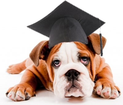 "Dog ""Earns"" MBA, but Is His Degree Real?"
