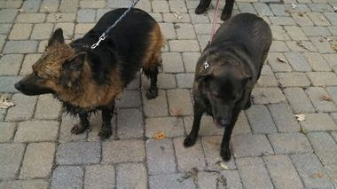 Police Rescue Muddy Dogs and Take Them Back Home