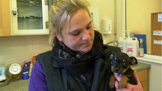 Puppies Thrown from Moving Car, Only One Survived