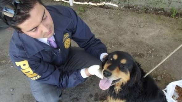 Dog rescued from Parral River, Chile.