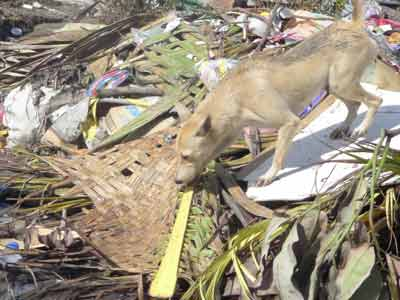 Rescuing Typhoon Yolanda's Four-Legged Survivors