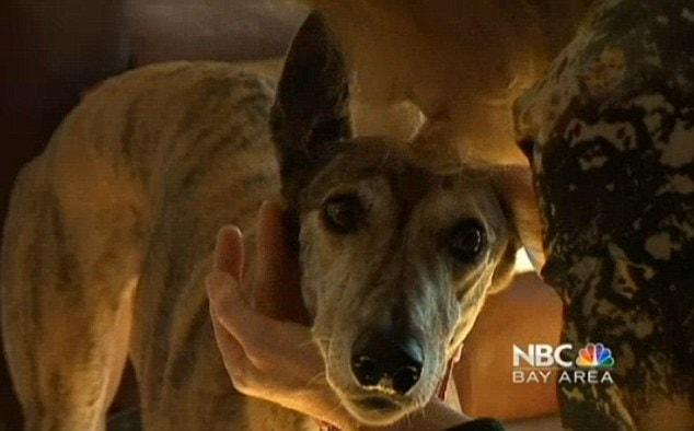 'United Airlines Almost Killed My Greyhound'