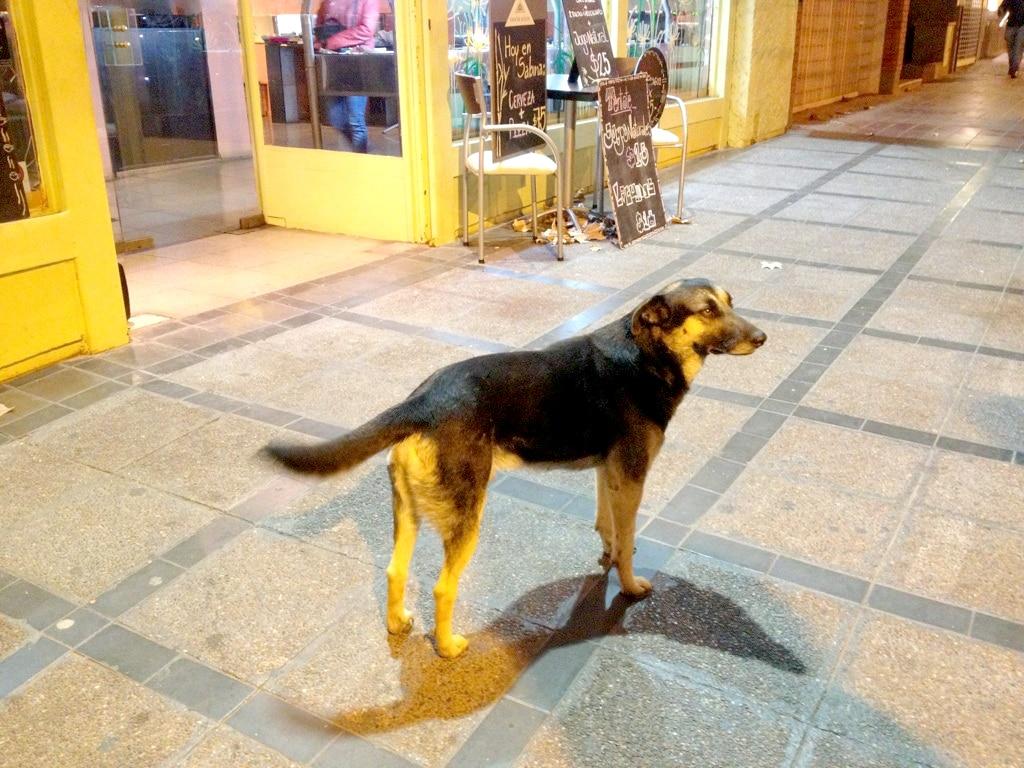 Unwanted Dog Becomes Young Girls' Hero