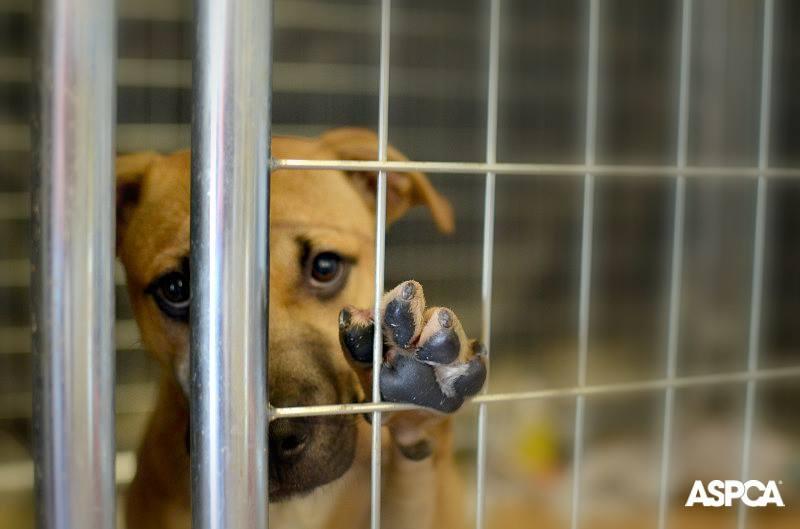 Dog Adoption Commercial