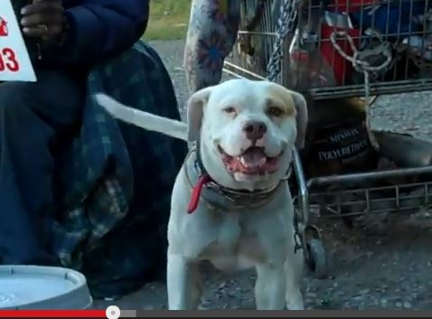 Film Crew Captures the Complex Existence of Many Detroit Dogs