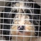 100 Dogs Rescued from Oregon Puppy Mill