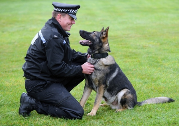 Dog Rescued from Abuse Finds New Home on the Police Force