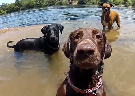 The Saturday Pet Blogger Hop: GoPro Dog Faces