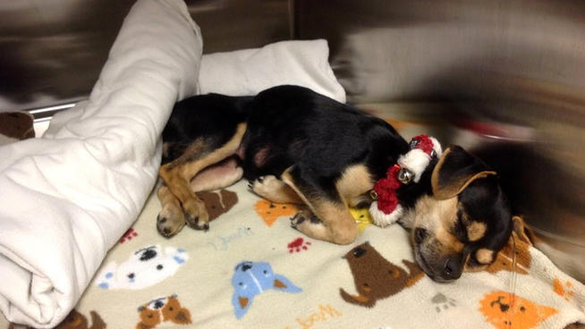 Rescue Raising Funds to Help Save Dog Abandoned in a Dumpster