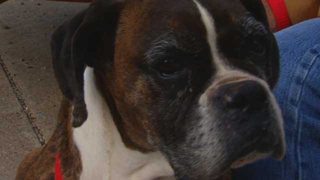 Microchip Reunites Family with Missing Dog Found 1,000 Miles from Home