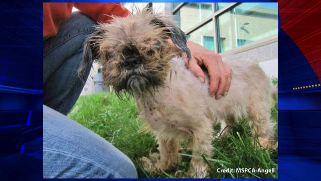 Severely Neglected Dog Finds New Home