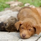 Puppy Refuses to Leave his Sister's Side after she is Killed by a Car