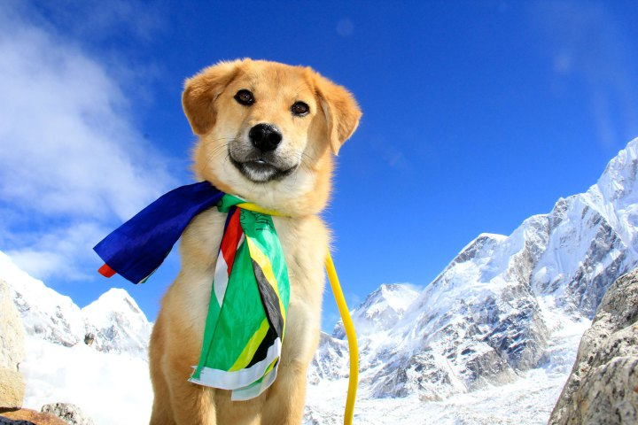 Adopted Stray Dog Becomes First Dog to Climb Mount Everest
