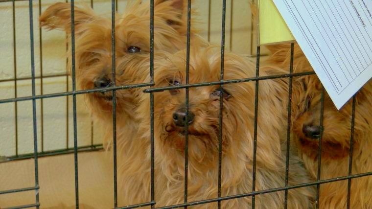 122 Dogs Rescued from Freezing in Outdoor Puppy Mill