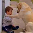Dog Befriends Timid Boy with Down Syndrome
