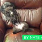 Best Dog Vines of 2013