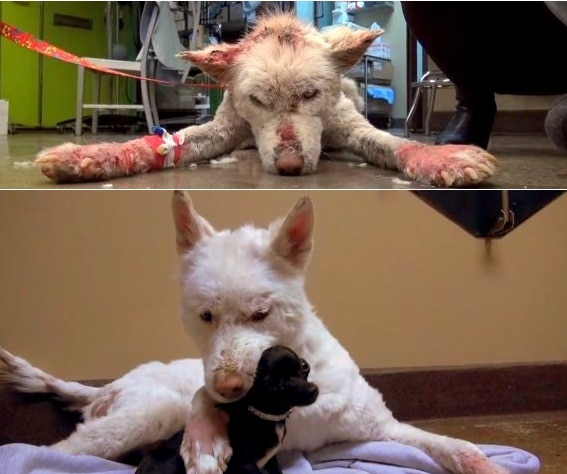 Dog Rescued from Trash Heap Makes Amazing Transformation