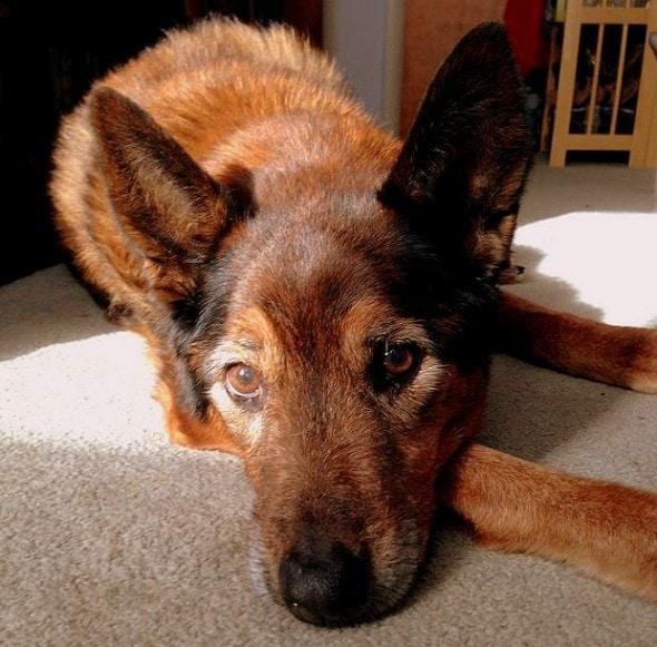 12.13.13 - Loving Tribute to Deceased Dog1
