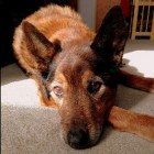 The Story of Nikki: John Serba's Tribute to His Dearly Departed Dog