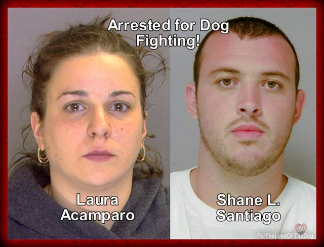 Man Sentenced up to 15 Years for Dog Fighting
