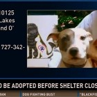 Adopters Needed for Florida Shelter Closing Its Doors
