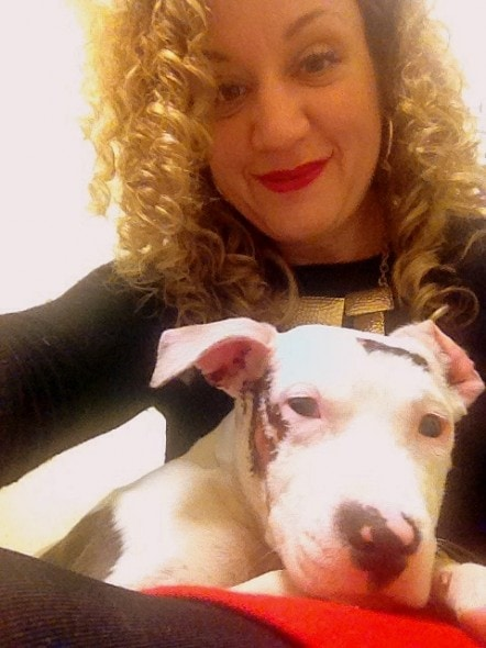 12.25.13 - Pit Bull Survives Being Struck by Car - Twice2