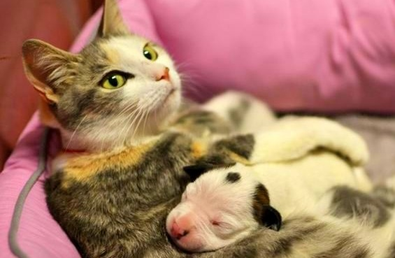 Stray Cat Takes in Day-Old Puppy, Helps Raise Him
