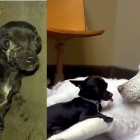 Hope for Paws Rescues Dog Living in Drainage Pipe