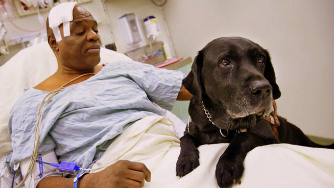 Blind Man and Guide Dog Survive Fall onto Subway Tracks