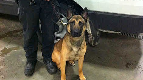 Police K-9 Nabs Man Who Beat Woman and Her Dog