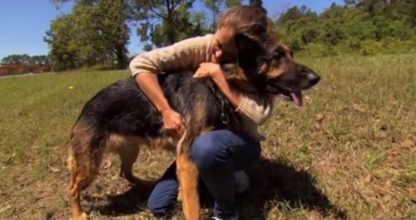 12.4.13 - Stray Dog Saves Accident Victim