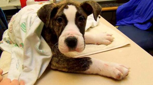 12.6.13 - Dog Finds Abused Dog1