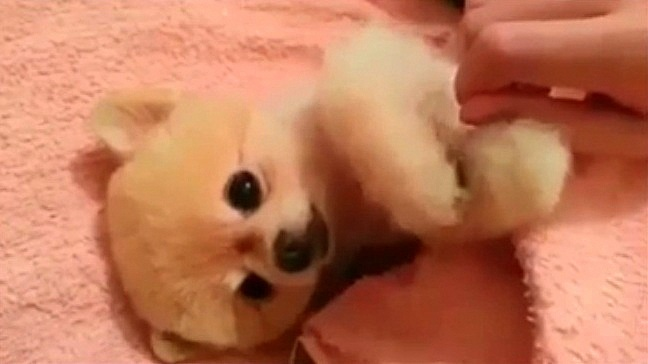 Puppy Wants Massage