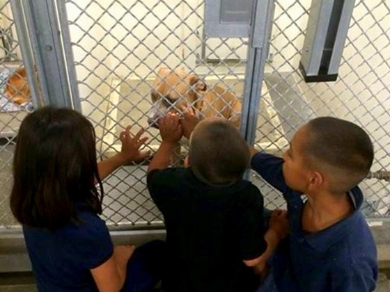 UPDATE: Incarcerated Dogs Freed & Returned to Family