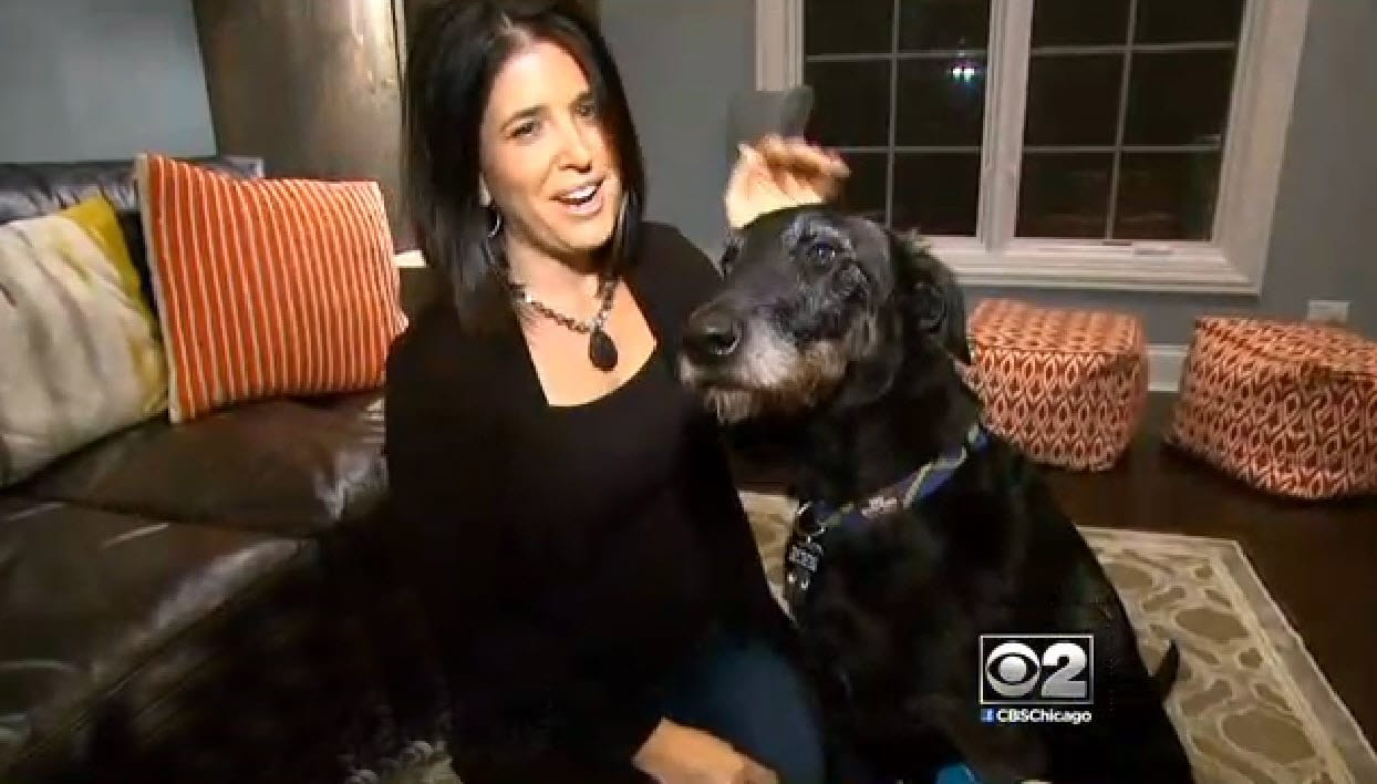 Woman Helps Find Local Chicago Dog from 4,600 miles Away