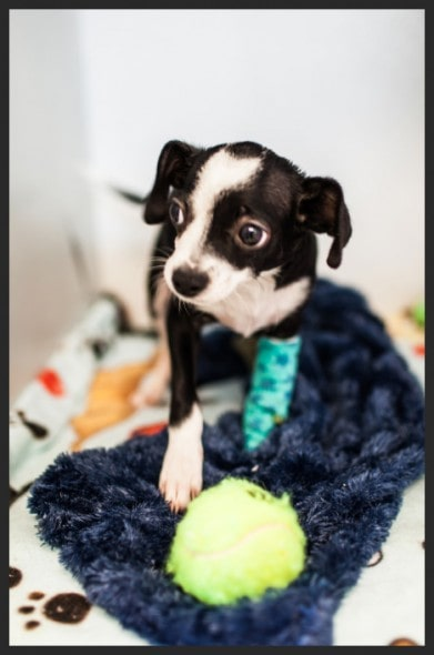 Barney needs your help! Photo Credit:  is open to out of state adoptions as long as interested parties are willing to travel to meet and pick