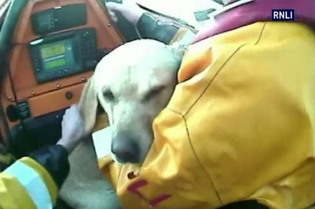 Lifeboat Rescues Dog Stranded on Reef