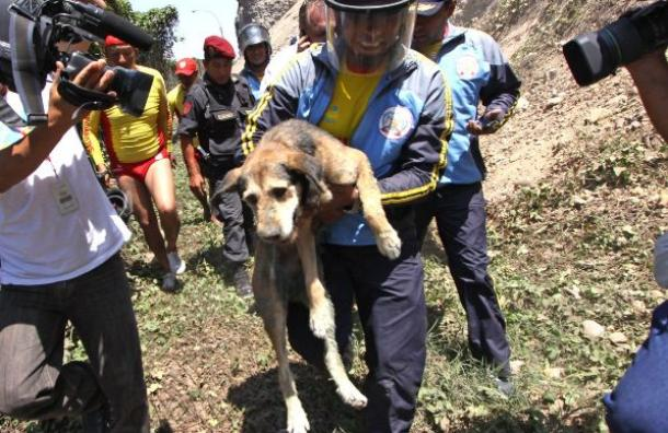Police Rescue Stray Dog from Cliff