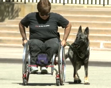 Justice True: A Talented Service Dog