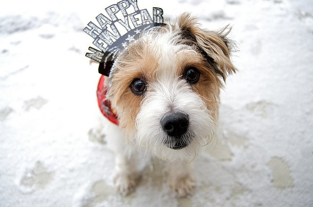 2014 Resolutions for Dog Owners