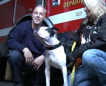 Dog Rescued by Detroit Firehouse, Becomes One of the Crew