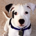 Puppy Stolen with Christmas Presents Reunited with Family
